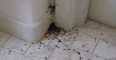 Τώρα που πλησιάζει το καλοκαίρι, δεν υπάρχει κάτι πιο ενχολητικό από τα μυρμήγκια που θα κατακλύσουν τον κήπο και το σπίτι μας. Ο λόγος αυτής της «επιδρομής» είναι προφανώς η αναζήτηση τροφής, οπότε πέρα από την προφανή συμβουλή του να καλύπτετε το φαγητό σας και να χρησιμοποιείτε κάδους απορριμμάτων με καπάκι, θα σας παρουσιάσουμε μερικά …