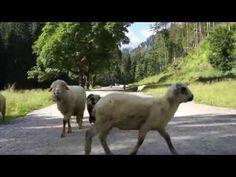 Spacer przez Dolina Kościeliska - ZAKOPANE - YouTube