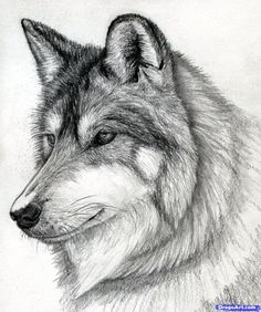 http://imgs.steps.dragoart.com/how-to-draw-a-wolf-head-mexican-wolf-step-15_1_000000084975_5.jpg