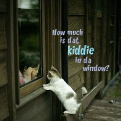 How much is that kiddie in the window?