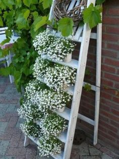 Mount an old painted ladder to a wall and display cascading potted plants like lobelia on it. Pretty!