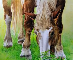 """Draft Horse""  Watercolor  Kimberly Meuse Watercolor Paintings Of Animals, Watercolor Horse, Draft Horses, Country Farm, Gallery, Watercolors, Memories, Watercolor Paintings, Water Colors"