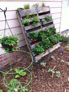 how to make a vertical garden with Pallet (instructions) @Jess Liu Davis vertical strawberries to save space?