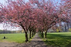 Edinburgh Lifestyle, Food and Fashion Blog   Edinburgh Etiquette: Edinburgh in Springtime: Daffodils and a To Do List