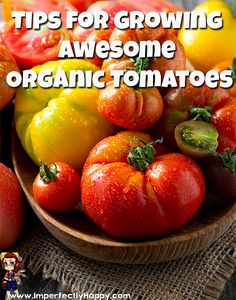 Tips for Growing Awesome Organic Tomatoes