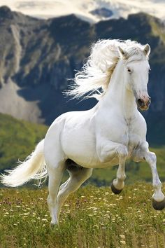 You may think that this is a white horse but it's not, it's a gray. For it to be called white the horse would have to have all pink skin. But this horse has some gray skin still. Horse lesson for the day! Most Beautiful Animals, Beautiful Horses, Beautiful Creatures, Horse Photos, Horse Pictures, Animals And Pets, Cute Animals, Animals Photos, Majestic Horse