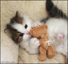 KITTEN GIF • Cuteness overload ♥ Adorable Kitty hugging kissing his little teddy bear