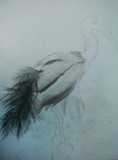 Stork?......
