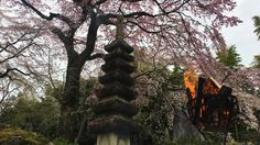 The residence of Toemon SANO (Kyoto, Japan):佐野藤右衛門邸