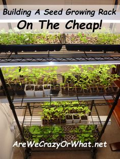 Building a seed growing rack on the cheap plants easy and gardens building a seed growing rack on the cheap workwithnaturefo