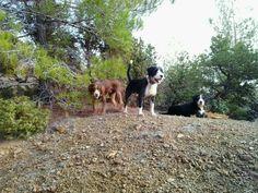 Beautiful Gang Dog Members