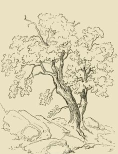 Pencil like sketch of a tree growing among rocks.