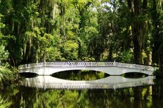 Magnolia Plantation, Ashley River, Charleston, South Carolina