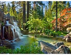 backyard waterfall.