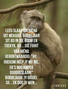 Leeu, hiëna en bobbejaan Best Quotes, Funny Quotes, Afrikaanse Quotes, Morning Pictures, Twisted Humor, Life Lessons, Quotations, Funny Animals, Funny Pictures