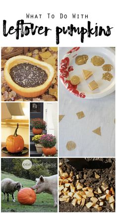 Some useful and even fun things you can do with your leftover Halloween pumpkins!