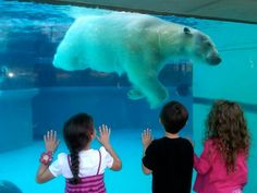 The 15 funnest things to do in Chicago! Take a look and take your kids!