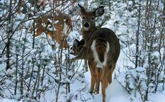 Upload your best weather photos or watch them in our searchable gallery. Weather Network, Giraffe, Deer, Scenery, Snow, Gallery, Nature, Photos, Animals