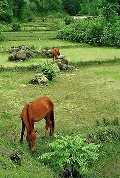 Do Hazaar Forest , Mazandaran - IRAN