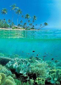 Sulawesi, Indonesia. http://pbs.twimg.com/media/BM0uurmCYAE9J1L.jpg