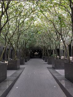 Beau couloir formé par les arbres. On peut le concevoir soi-même et sans beaucoup de place!