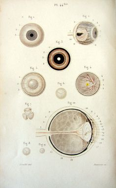 1852 Gorgeous antique anatomy EYES print  by LyraNebulaPrints