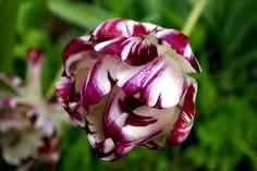 Spring, glorious spring. Heather Fong, Berkeley Cut Flowers, Spring Flowers, Wild Flowers, Welcome Spring, Floral Arrangements, Centerpieces, Bouquet, Rose, Plants