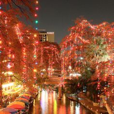 San Antonio I am guessing at Christmas time?!  The River Walk was wonderful in April, wonderful restaurants and shops.  Their botanical garden was beautiful.  But it was already too warm for this Northern girl.