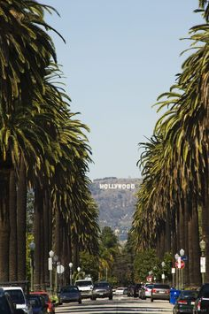 Hollywood Hills and The Hollywood sign from a tree lined Beverly Hills Boulevard, Los Angeles, California.