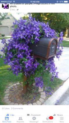 flowering creeper on mailbox