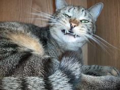 5 Parts of Cat Anatomy That Crack Me Up | Catster