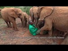 ▶ The Rescue of Kithaka - YouTube. This is my little foster baby, Kithaka!!!! He's adorable and I can't wait to visit Kenya to see him someday <3
