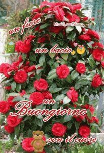 un-fiore-un-bacio-un-buongiorno