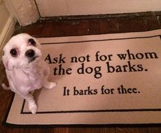 1000 Images About Dogs Why We Love Them On Pinterest