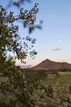 desert vistas.  via voguish at best | the velveteen girl