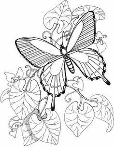 Dibujos de mariposas descargables para colorear  Clip art