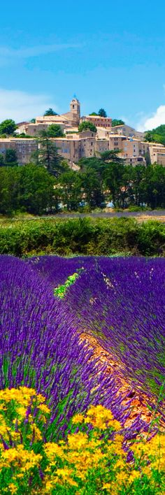 Lavender Fields by Banon - Provence | France