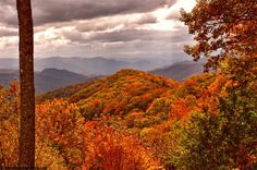 The Great Smokey National Park, Tennessee....one of my most favorite get-a-ways!