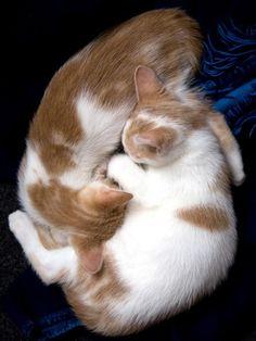 Sweet Dreams, Little Kittehs.
