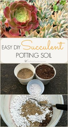 Step-by-step instructions (with photos) for making DIY succulent potting soil. M… Step-by-step instructions (with photos) for making DIY succulent potting soil. Making your own succulent potting soil is cheaper than buying the commercial stuff. Succulent Potting Mix, Succulent Gardening, Garden Soil, Planting Succulents, Container Gardening, Planting Flowers, Succulent Ideas, Succulent Landscaping, Succulent Containers