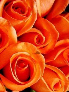Orange beauty's ✨