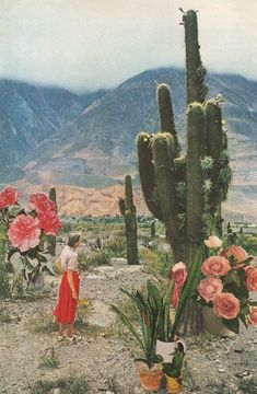 Available for purchase Desert Cactus Plants Landscape Flowers Lady America Painting Art Classic Sky Nature Beautiful Green Pink Red Orange Garden Desert Dream, Photocollage, Alphonse Mucha, Cactus Y Suculentas, Foto Art, Collage Art, Collages, Nature Collage, Art Nature