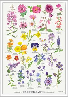 Koustrup & Co. plakat i - spiselige blomster - Hokus Krokus Poster Shop, Poster Prints, Posters, Balcony Flowers, Illustration Blume, T Art, Nordic Design, Edible Flowers, Botanical Prints