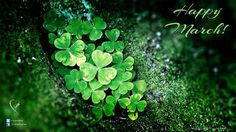 free pictures shamrocks (Whitby Allford 1920 x Shamrock Plant, St Patricks Day Wallpaper, Happy March, Hello March, Plant Wallpaper, Happy St Patricks Day, Luck Of The Irish, St Pattys, Go Green