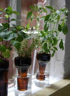 plantas en botellas de plastico