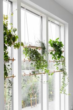 house plants 643170390518577629 - Indoor gardening helps you control the environment surrounding your plant, and at the same time, the plant produces better air inside the house. Use these ideas for a beautiful indoor garden. Source by omghomy Green Windows, Room With Plants, Plant Shelves, Hanging Plants Indoor, Window Plants, House Plants Indoor, Hanging Plants Diy, Hanging Plant Holder, Plant Holders