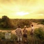 7 African Safari, Vineyard, Wildlife, Gallery, Outdoor, Outdoors, Vine Yard, Vineyard Vines, Outdoor Living