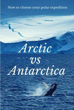 Arctic or Antarctica? How to Choose your Polar Expedition    The Planet D Adventure Travel Blog