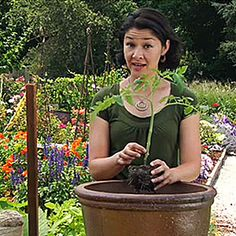 How to grow vegetables in containers - I watched all the videos from this - very good.