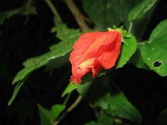 Una flor de Río de Janeiro